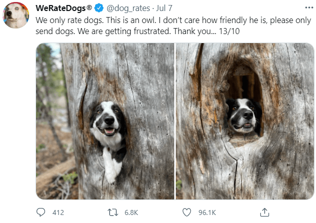 Dog - WeRateDogs® O @dog_rates · Jul 7 We only rate dogs. This is an owl. I don't care how friendly he is, please only send dogs. We are getting frustrated. Thank you. 13/10 412 t7 6.8K 96.1K
