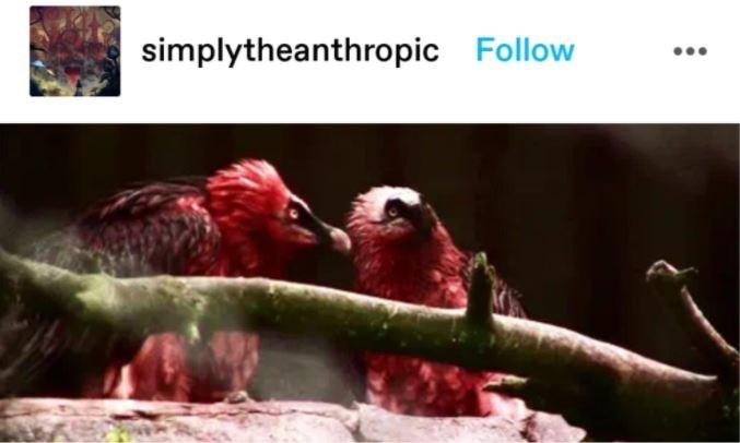 Bird - simplytheanthropic Follow