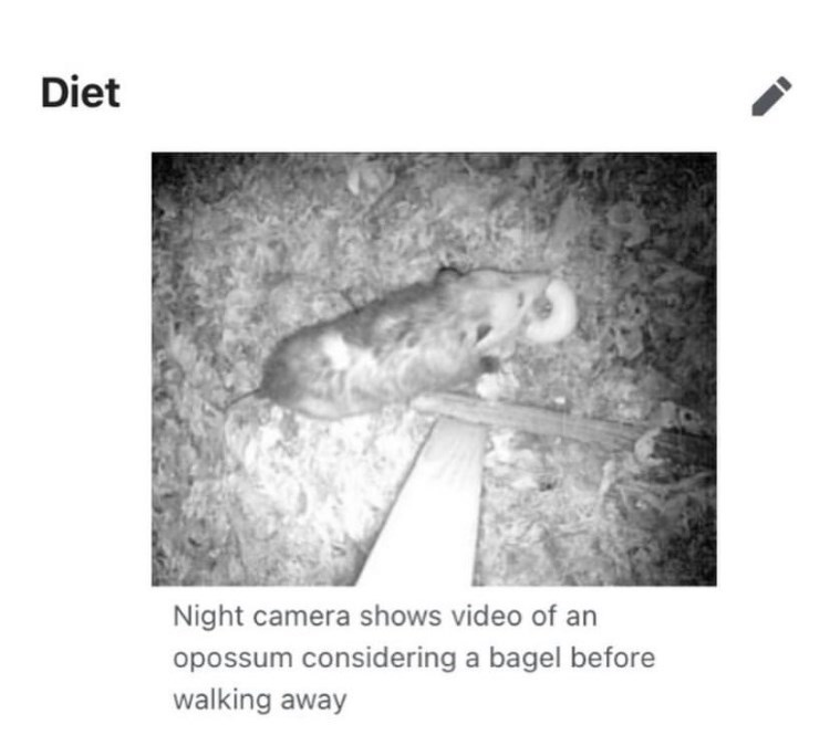 Font - Diet Night camera shows video of an opossum considering a bagel before walking away