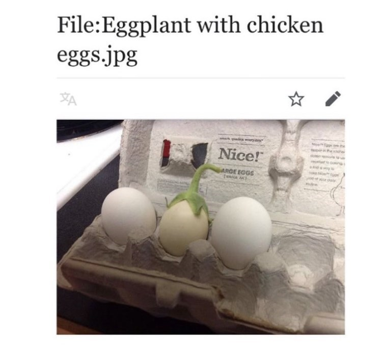 "Egg - File:Eggplant with chicken eggs.jpg XA ery Nice!"" ARGE EGGS"