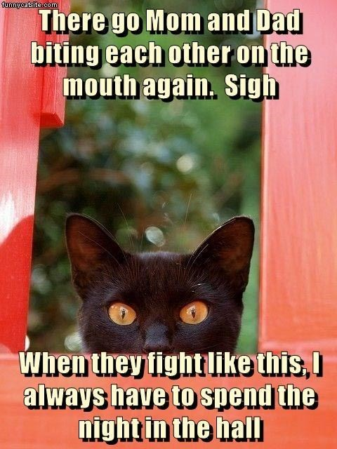 Brown - funnycatsite.com There go Mom and Dad biting each other on the mouth again. Sigh When they fightlike this, I always have to spend the night in the hall