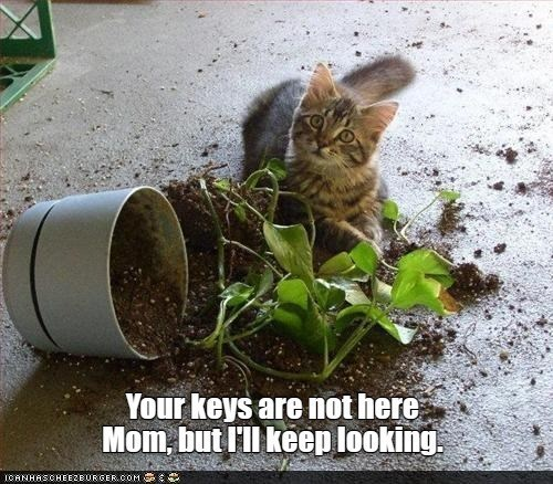 Cat - Your keys are not here Mom, but l'l keep looking. ICANHASCHEEZBURGER.COM