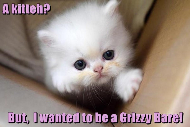 Cat - A kitteh? But, Iwanted to be a Grizzy Bare!