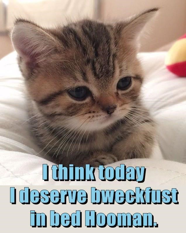Cat - Ithinktoday Ideserve bweckiust in bed Hooman.