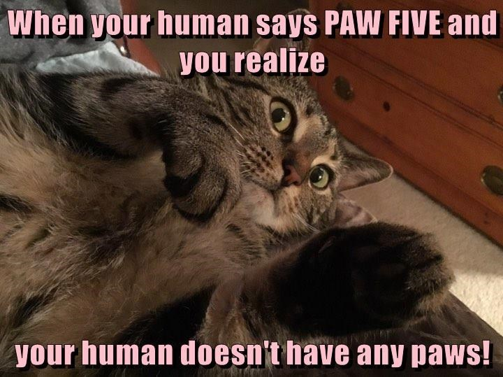 Cat - When your human says PAW FIVE and you realize your human doesn't have any paws!