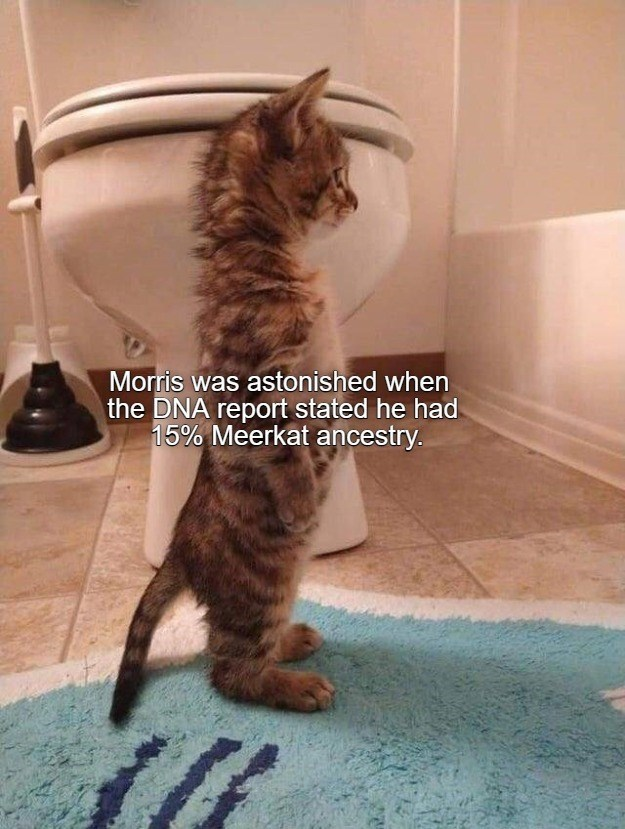 Cat - Morris was astonished when the DNA report stated he had 15% Meerkat ancestry.