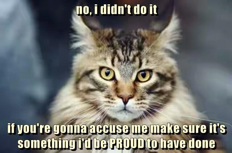 Cat - no, i didn't do it if you're gonna accuse me make sure it's something idbe PROUD to have done