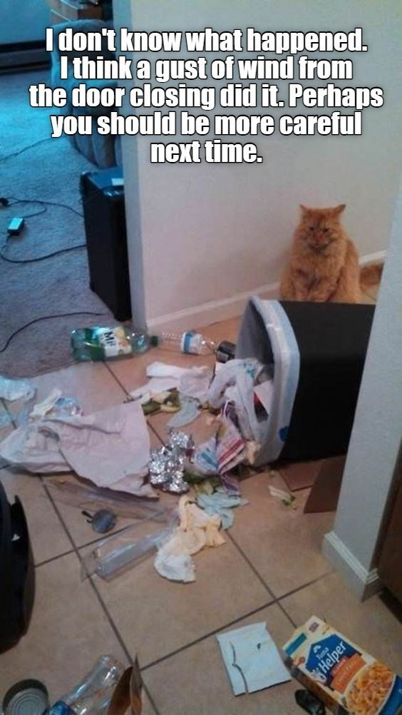 Cat - I don't know what happened. I think a gust of wind from the door closing did it. Perhaps you should be more careful next time.