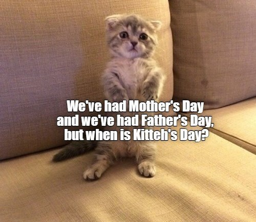 Furniture - We've had Mother's Day and we've had Father's Day, but when is Kitteh's Day?