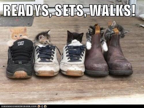 Shoe - READYS, SETS, WALKS! ICANHASCHEEZBURGER.COM