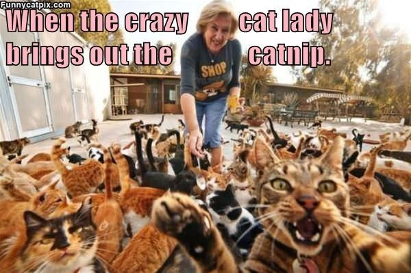 Photograph - Funnycatpix.com When the crazy cat lady brings out the catnip SHOP
