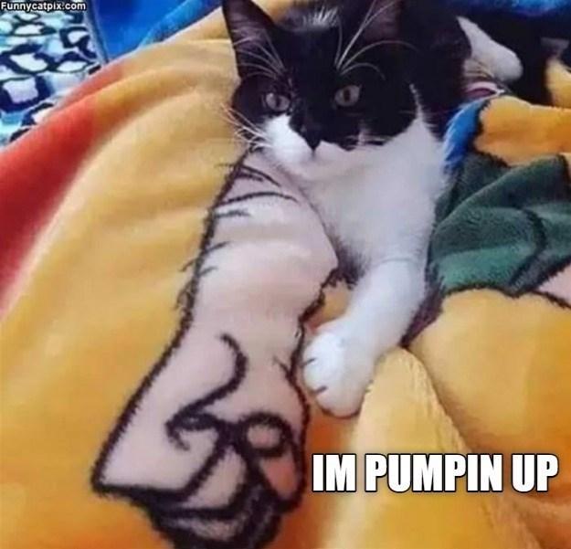 Cat - Funnycatpix.com IM PUMPIN UP