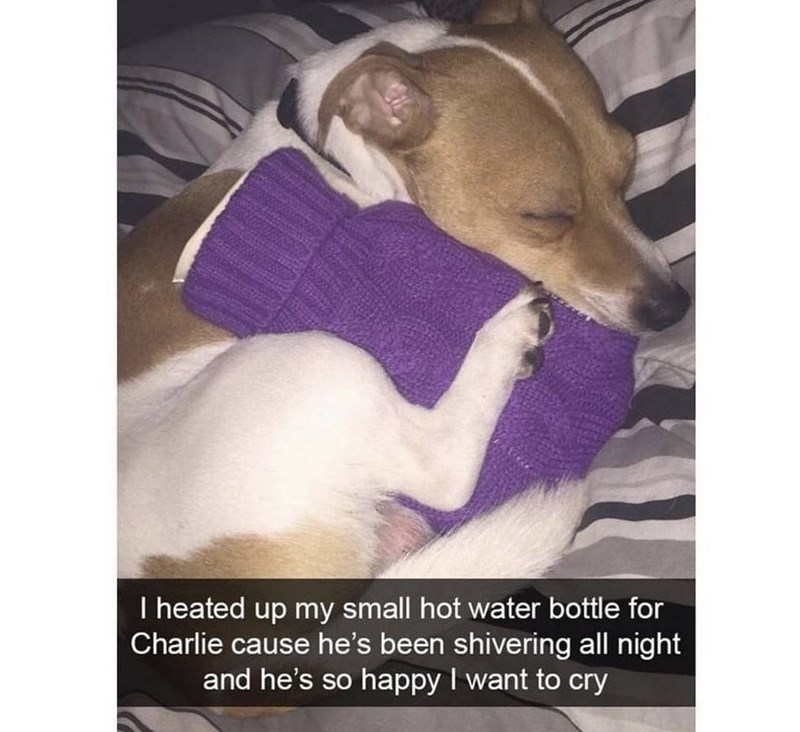 Dog - I heated up my small hot water bottle for Charlie cause he's been shivering all night and he's so happy I want to cry
