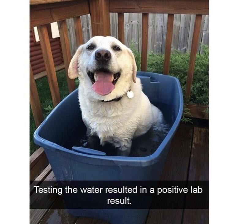 Dog - Testing the water resulted in a positive lab result.