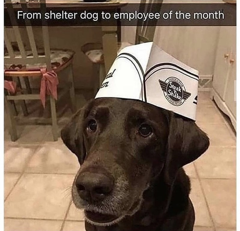 Dog - From shelter dog to employee of the month Steak Shake