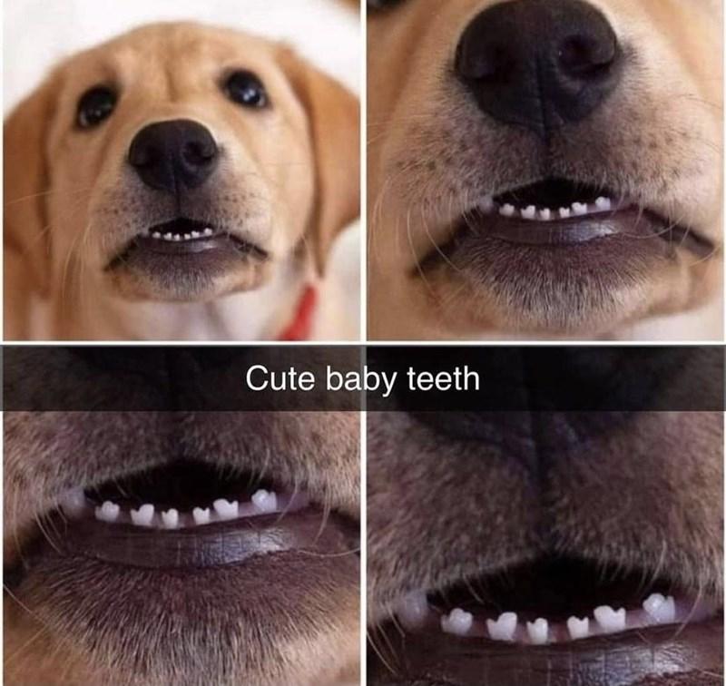 Nose - Cute baby teeth