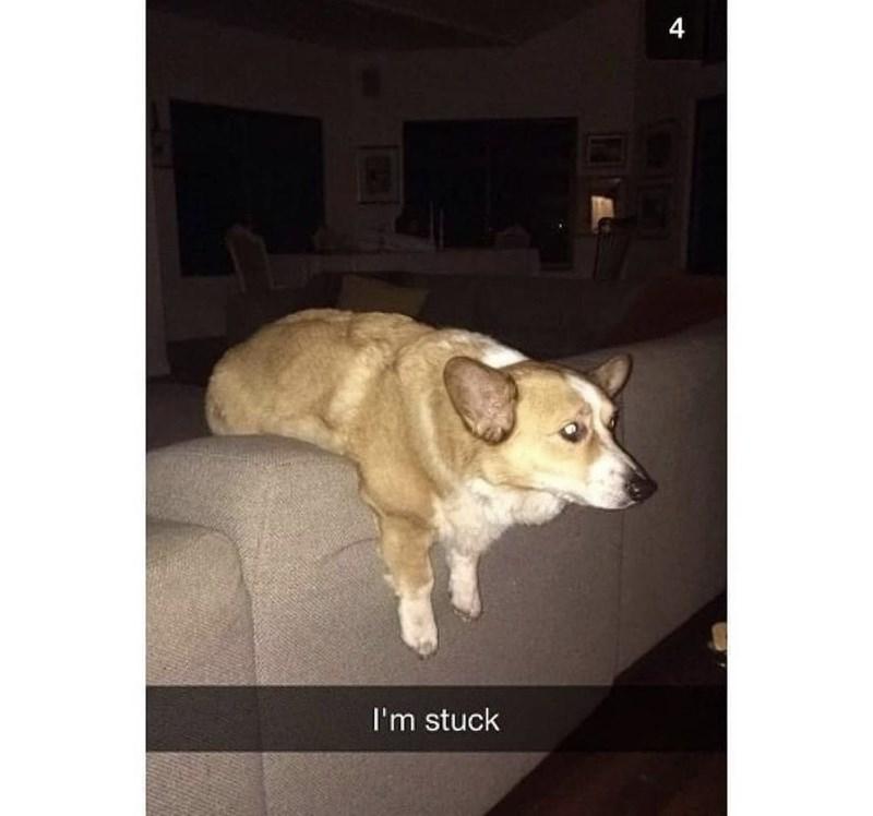Dog - 4 I'm stuck