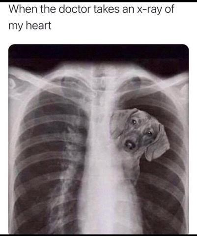 X-ray - When the doctor takes an x-ray of my heart
