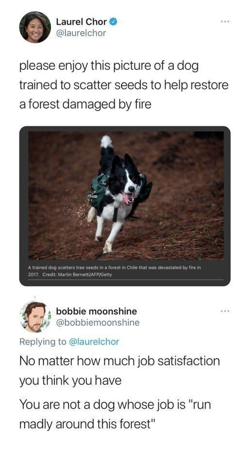 """World - Laurel Chor @laurelchor ... please enjoy this picture of a dog trained to scatter seeds to help restore a forest damaged by fire A trained dog scatters tree seeds in a forest in Chile that was devastated by fire in 2017. Credit: Martin Bernetti/AFP/Getty bobbie moonshine @bobbiemoonshine Replying to @laurelchor No matter how much job satisfaction you think you have You are not a dog whose job is """"run madly around this forest"""""""