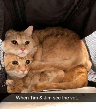 Cat - When Tim & Jim see the vet..