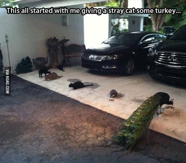 Car - This all started with me givinga stray cat some turkey.. VIA 9GAG.COM