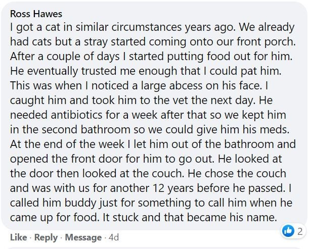 Font - Ross Hawes I got a cat in similar circumstances years ago. We already had cats but a stray started coming onto our front porch. After a couple of days I started putting food out for him. He eventually trusted me enough that I could pat him. This was when I noticed a large abcess on his face. I caught him and took him to the vet the next day. He needed antibiotics for a week after that so we kept him in the second bathroom so we could give him his meds. At the end of the week I let him out