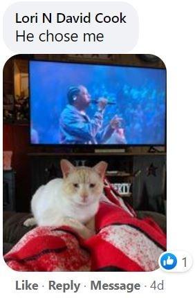 Cat - Lori N David Cook He chose me Like · Reply Message 4d