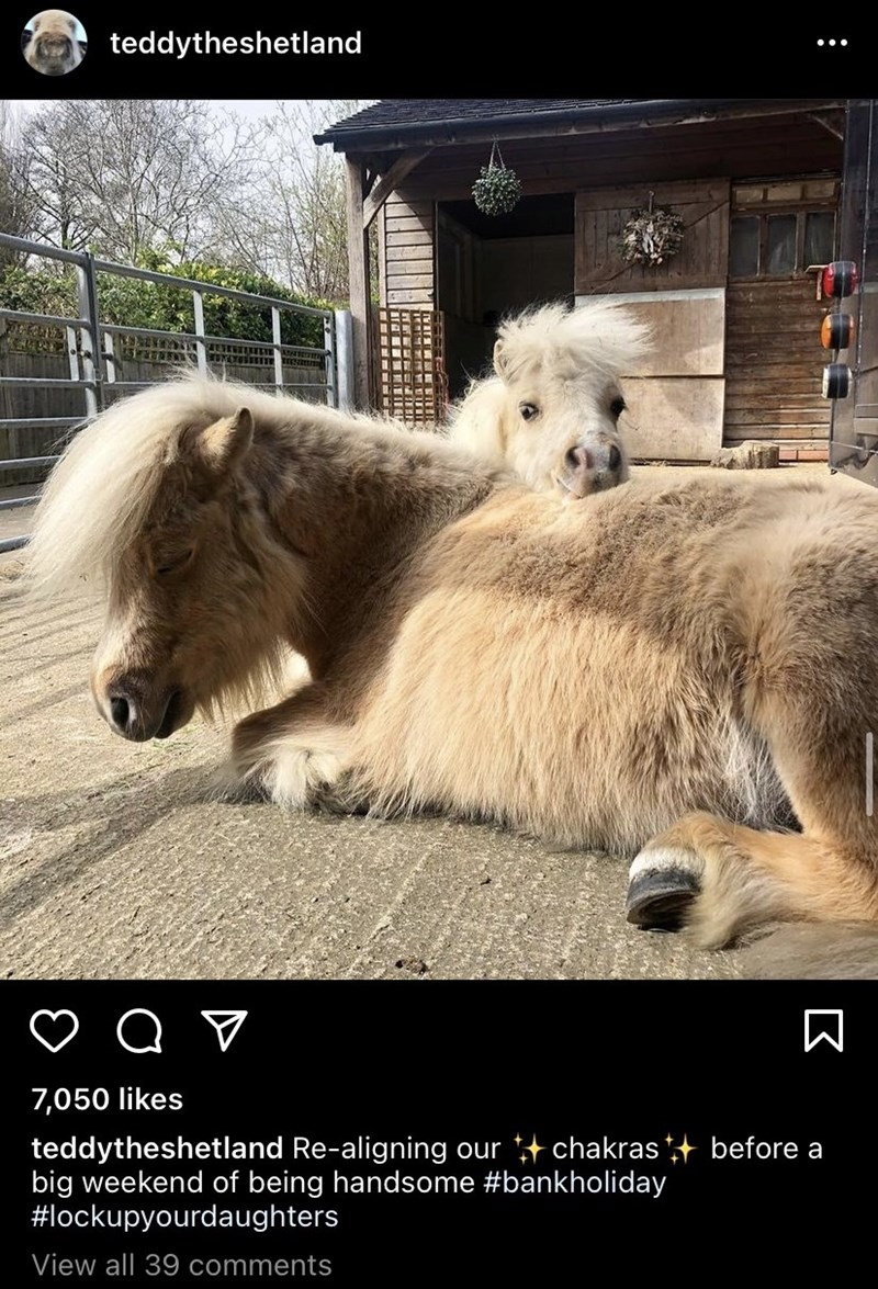 Dog breed - teddytheshetland 7,050 likes teddytheshetland Re-aligning our + chakras + before a big weekend of being handsome #bankholiday #lockupyourdaughters View all 39 comments