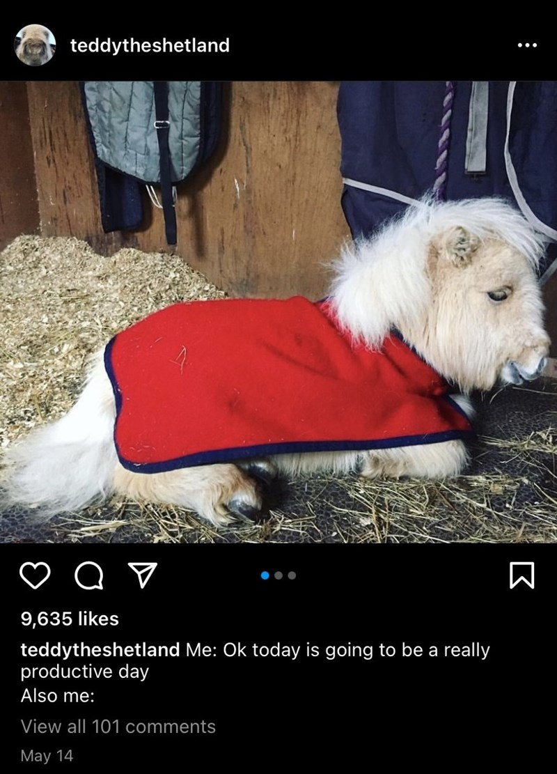 Dog - teddytheshetland 9,635 likes teddytheshetland Me: Ok today is going to be a really productive day Also me: View all 101 comments May 14