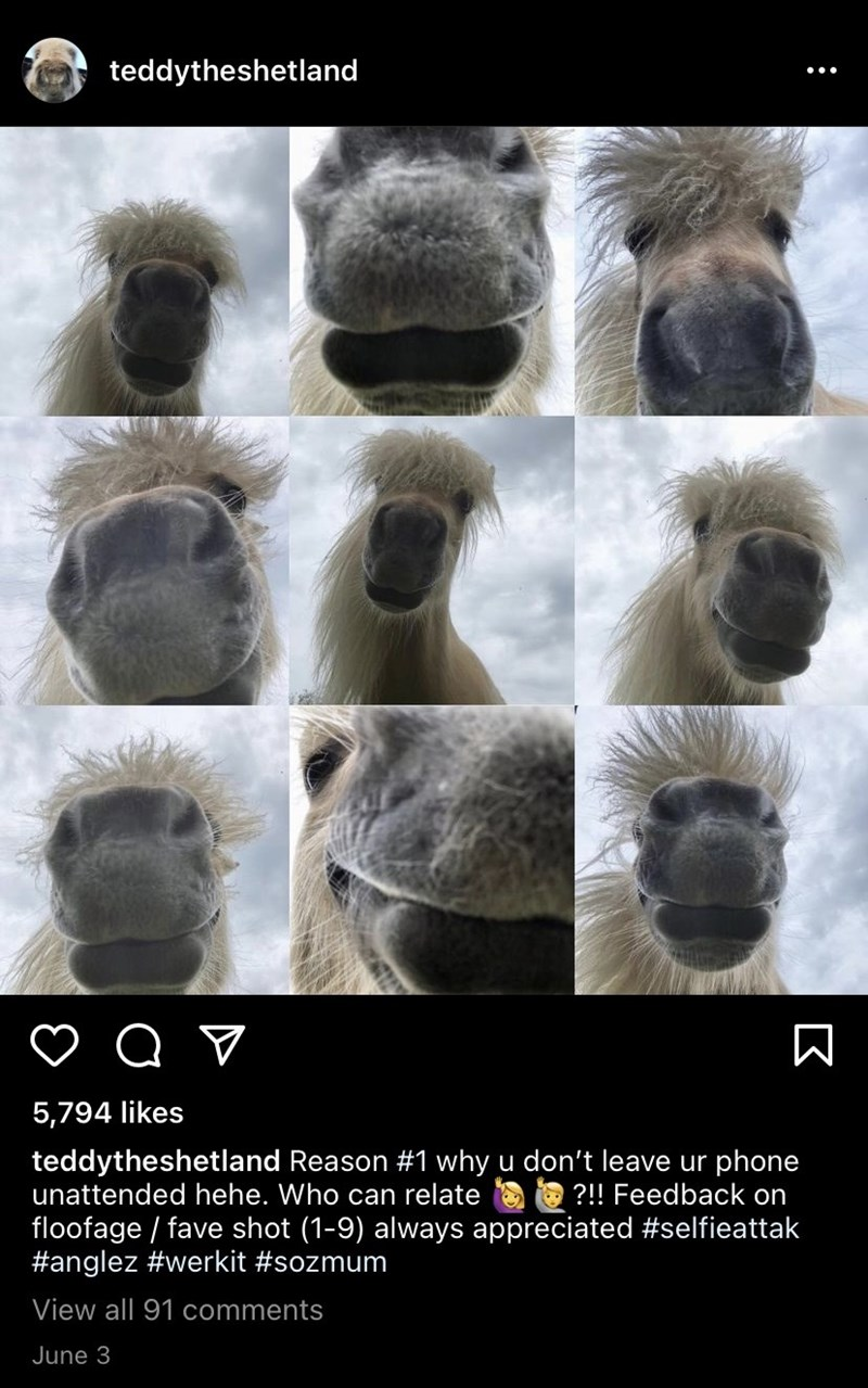 Nature - teddytheshetland 5,794 likes teddytheshetland Reason #1 why u don't leave ur phone unattended hehe. Who can relate O ?!! Feedback on floofage / fave shot (1-9) always appreciated #selfieattak #anglez #werkit #sozmum View all 91 comments June 3