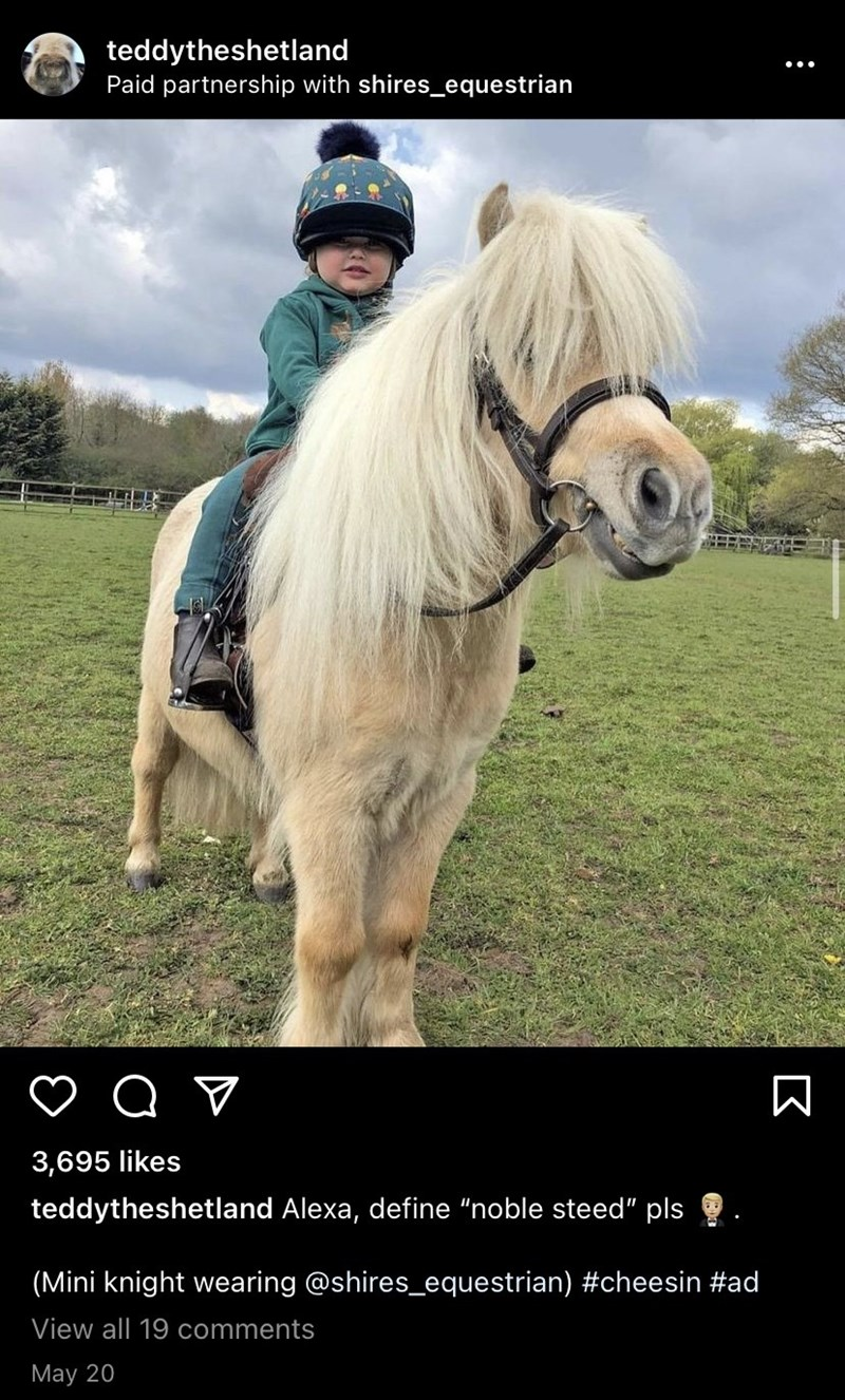 """Horse - teddytheshetland Paid partnership with shires_equestrian 3,695 likes teddytheshetland Alexa, define """"noble steed"""" pls (Mini knight wearing @shires_equestrian) #cheesin #ad View all 19 comments May 20 :"""