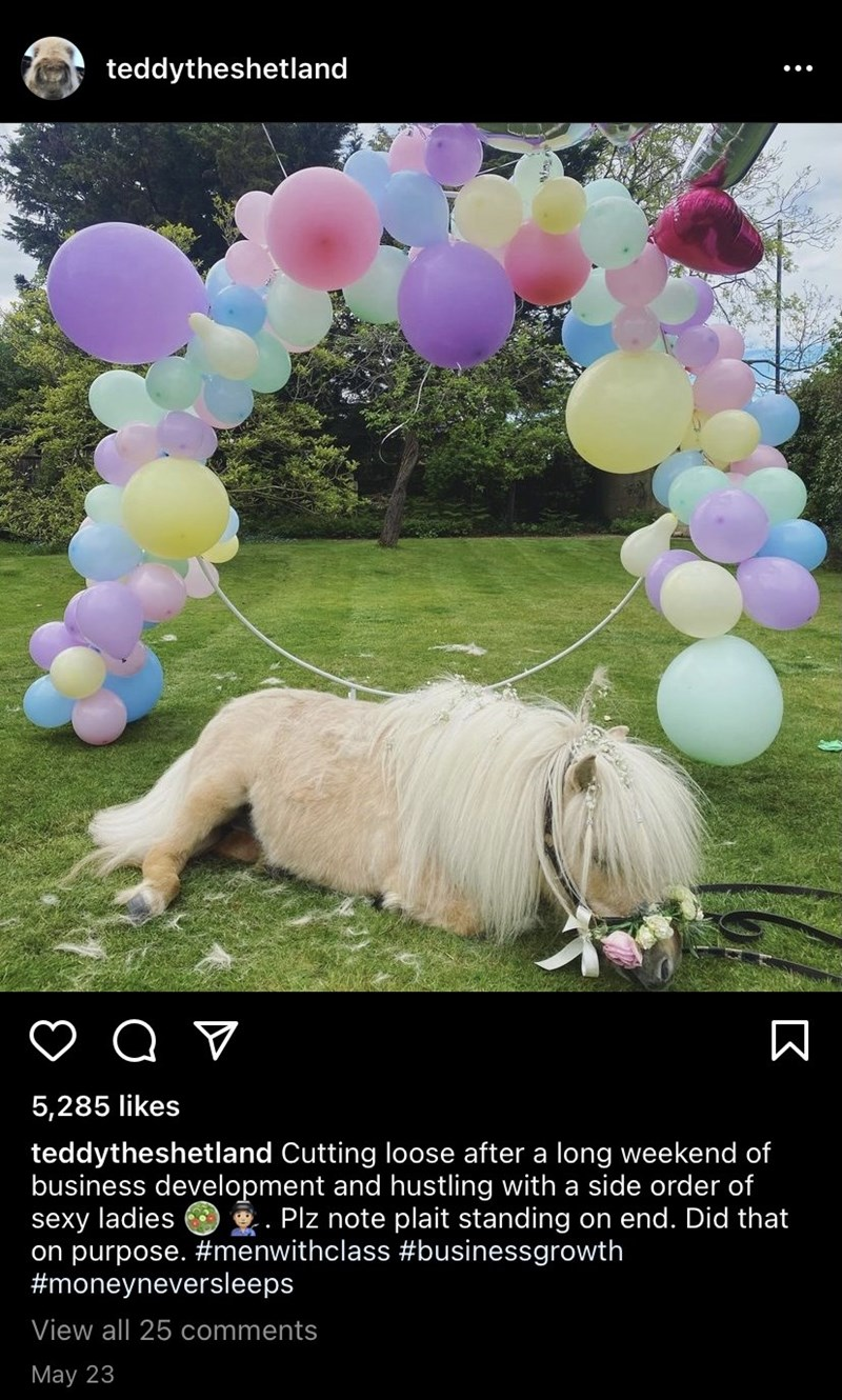 Plant - teddytheshetland 5,285 likes teddytheshetland Cutting loose after a long weekend of business development and hustling with a side order of sexy ladies on purpose. #menwithclass #businessgrowth #moneyneversleeps . Plz note plait standing on end. Did that View all 25 comments May 23 :