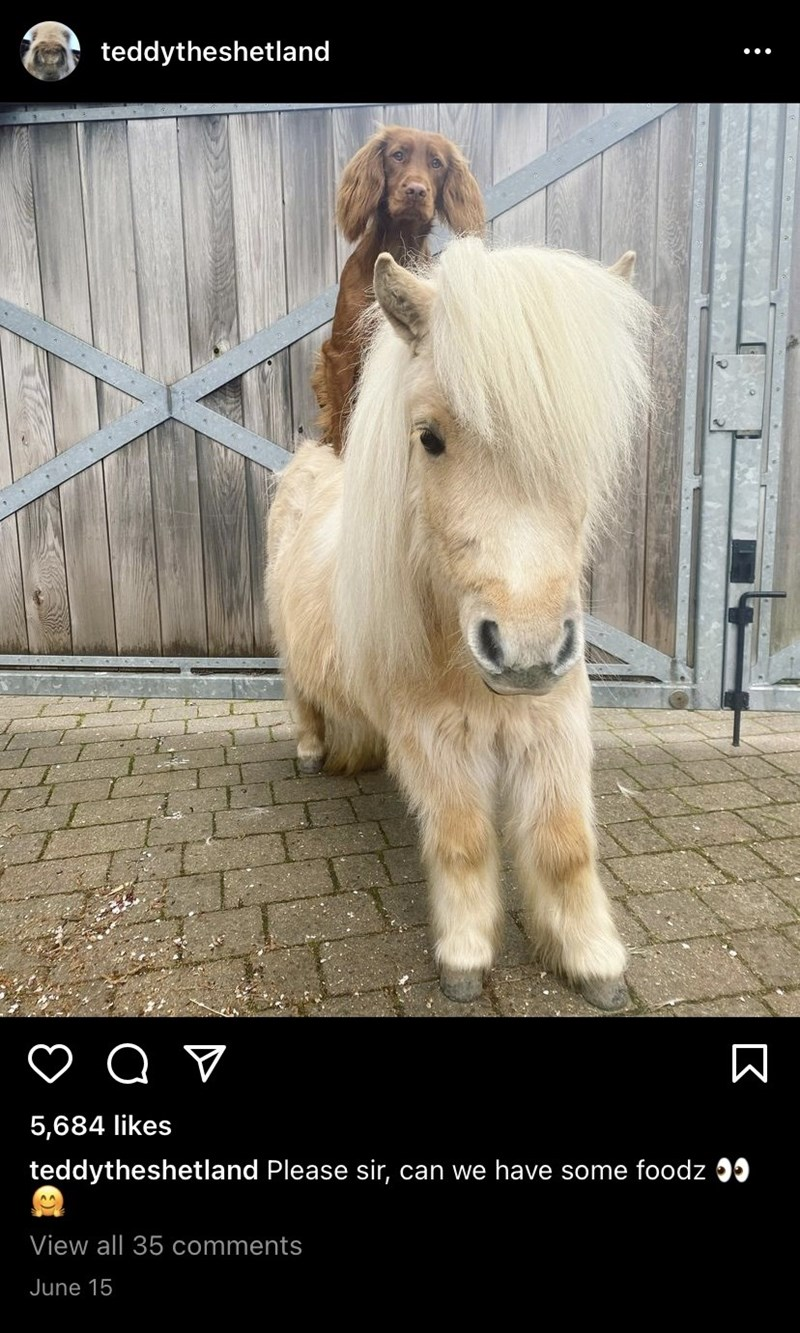Horse - teddytheshetland 5,684 likes teddytheshetland Please sir, can we have some foodz 99 View all 35 comments June 15