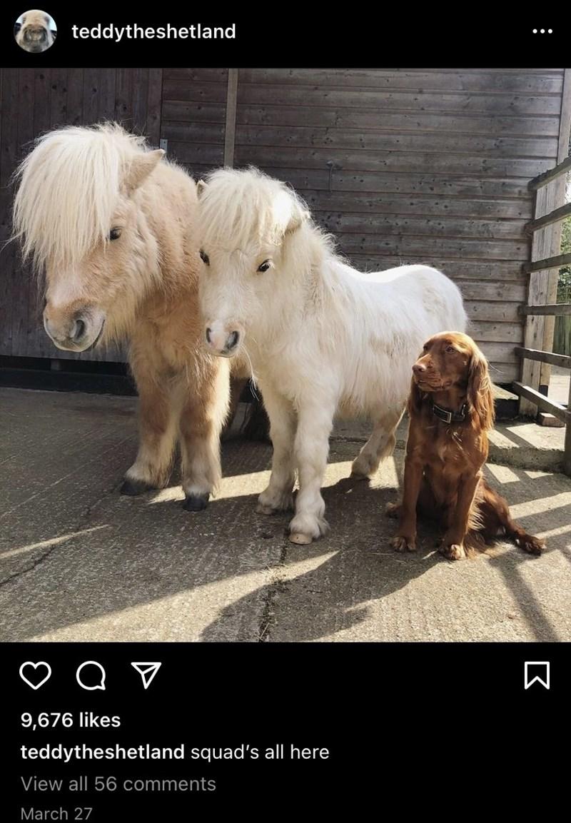 Dog - teddytheshetland 9,676 likes teddytheshetland squad's all here View all 56 comments March 27 :