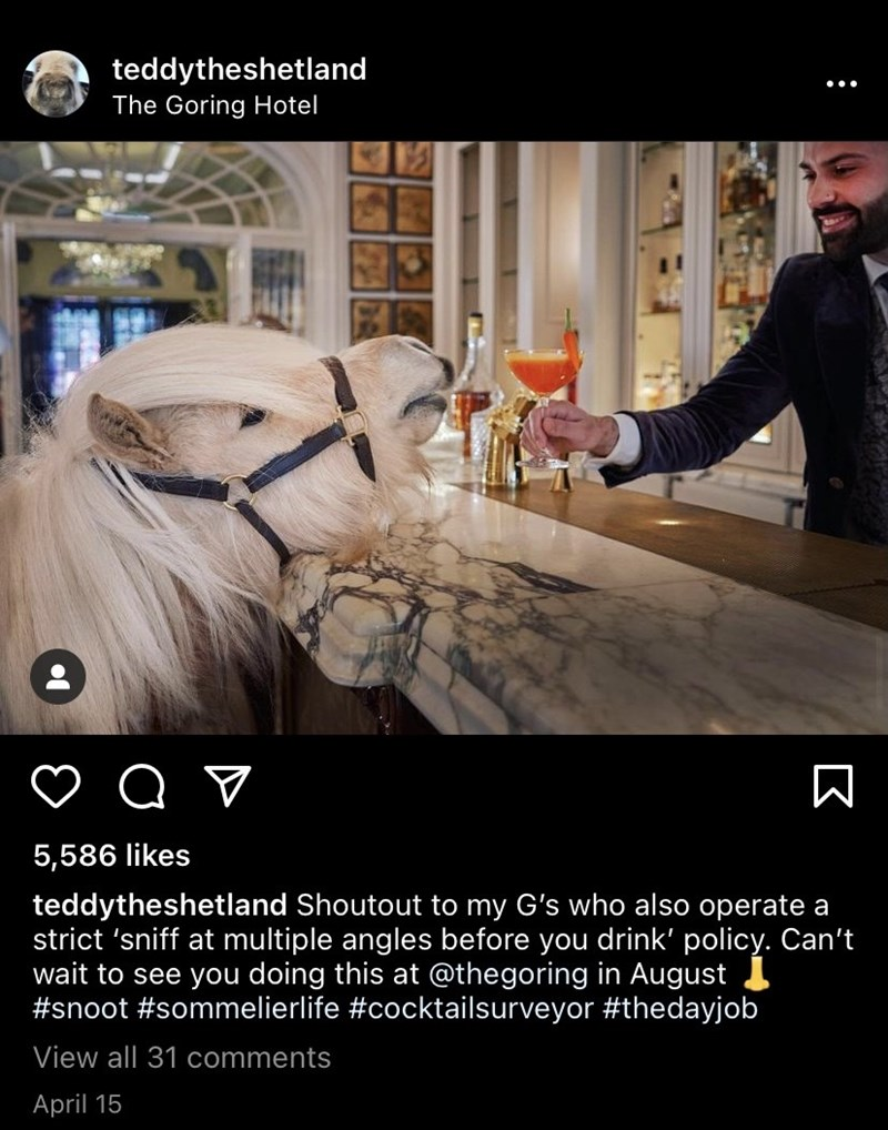 Horse - teddytheshetland The Goring Hotel 5,586 likes teddytheshetland Shoutout to my G's who also operate a strict 'sniff multiple angles before you drink' policy. Can't wait to see you doing this at @thegoring in August #snoot #sommelierlife #cocktailsurveyor #thedayjob View all 31 comments April 15 :
