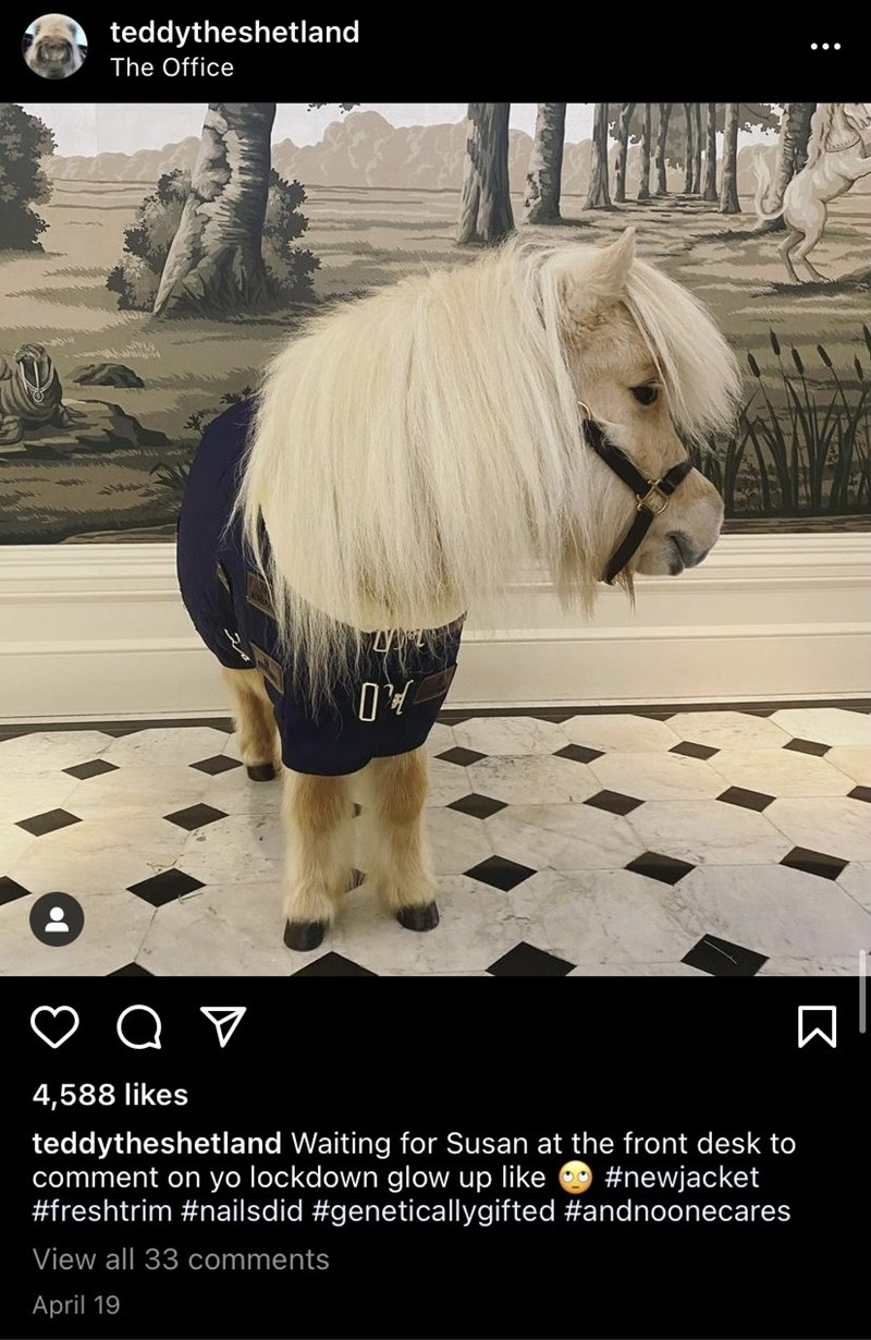 Horse - teddytheshetland The Office 4,588 likes teddytheshetland Waiting for Susan at the front desk to comment on yo lockdown glow up like #freshtrim #nailsdid #geneticallygifted #andnoonecares #newjacket View all 33 comments April 19