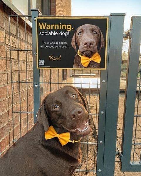 Dog - Warning, sociable dog! Those who do not floe will be cuddled to death. Peanut