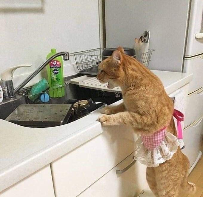 Kitchen sink - 4