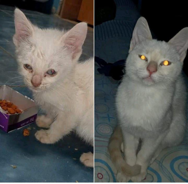 Cat - ANTMTIL