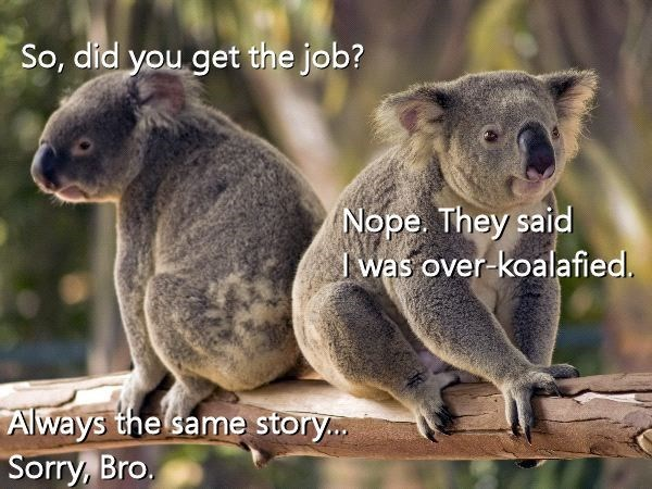 Organism - So, díd you get the job? Nope. They said I was over-koalafied. Always the same story.. Sorry, Bro.