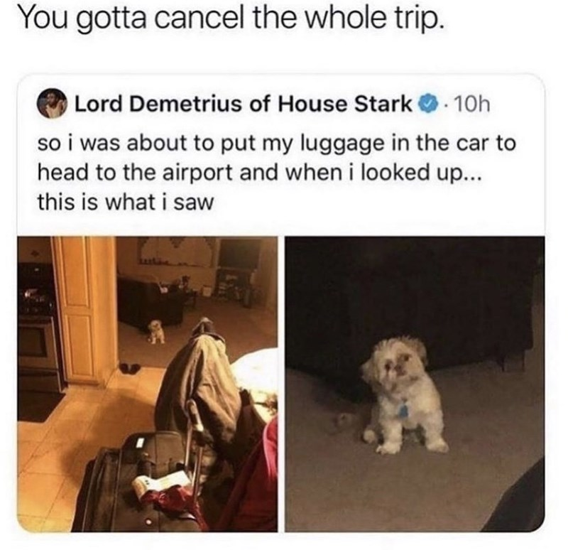 Dog - You gotta cancel the whole trip. Lord Demetrius of House Stark O. 10h so i was about to put my luggage in the car to head to the airport and when i looked up... this is what i saw