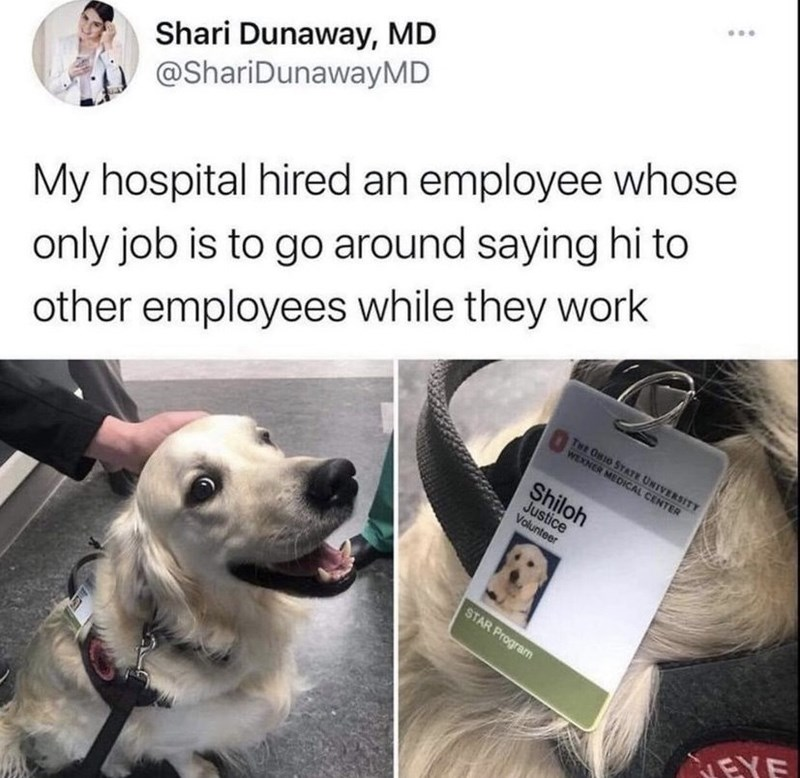 Dog - Shari Dunaway, MD @ShariDunawayMD My hospital hired an employee whose only job is to go around saying hi to other employees while they work Twe ONIO STATE UNIVERSITY WEXNER MEDICAL CENTER Shiloh Justice Volunteer STAR Program EYE