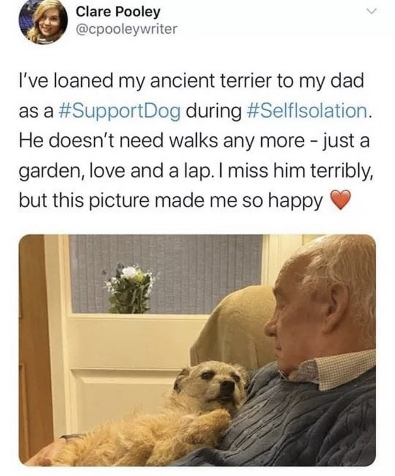 Product - Clare Pooley @cpooleywriter I've loaned my ancient terrier to my dad as a #SupportDog during #Selflsolation. He doesn't need walks any more - just a garden, love and a lap. I miss him terribly, but this picture made me so happy