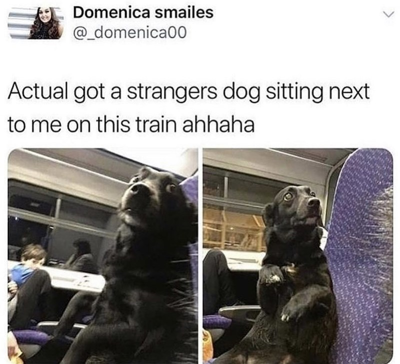 Font - Domenica smailes @_domenica00 Actual got a strangers dog sitting next to me on this train ahhaha