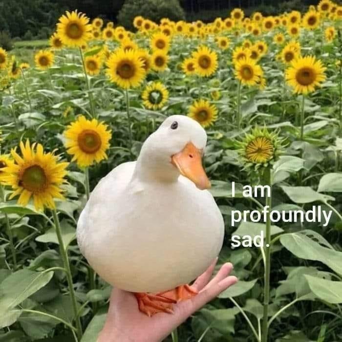 Flower - I am profoundly sad.