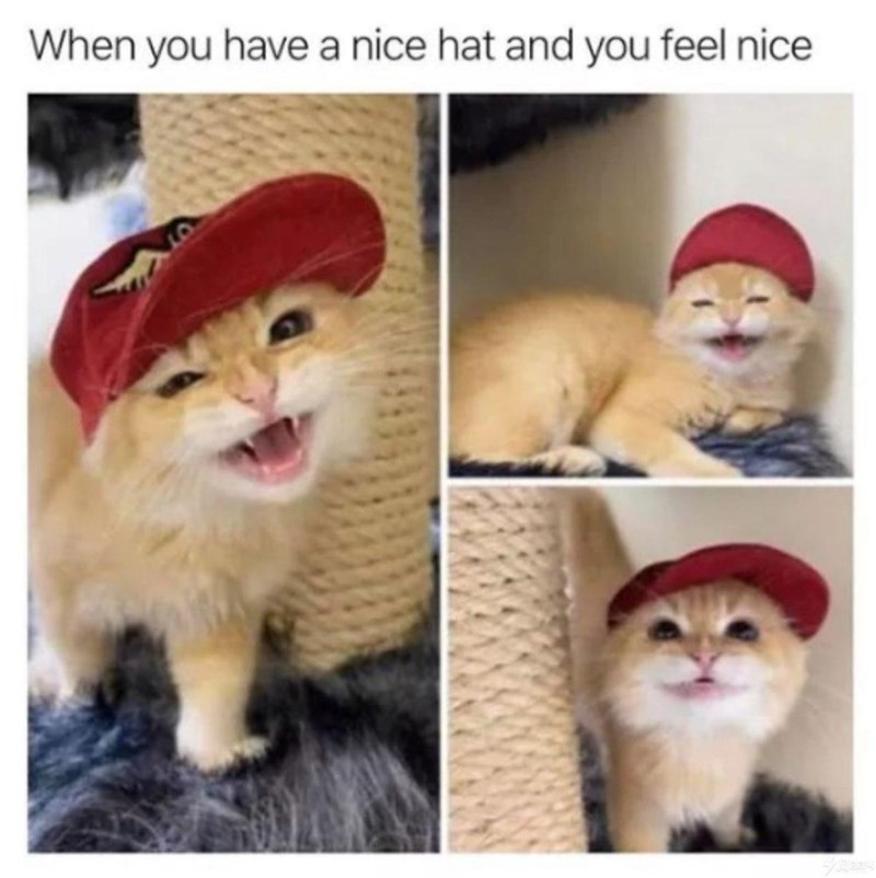 Cat - When you have a nice hat and you feel nice
