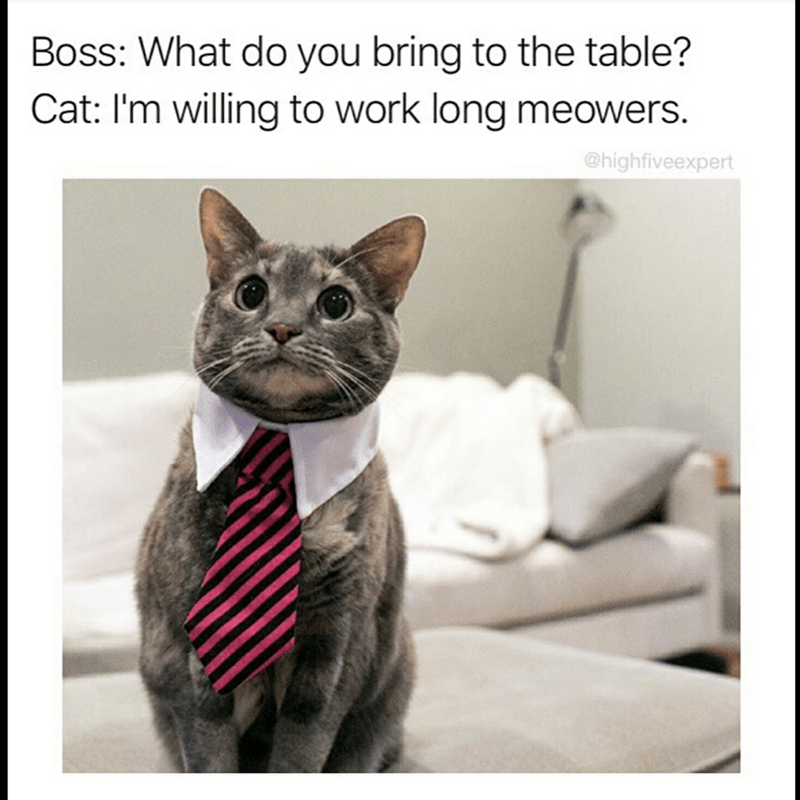 Cat - Boss: What do you bring to the table? Cat: I'm willing to work long meowers. @highfiveexpert