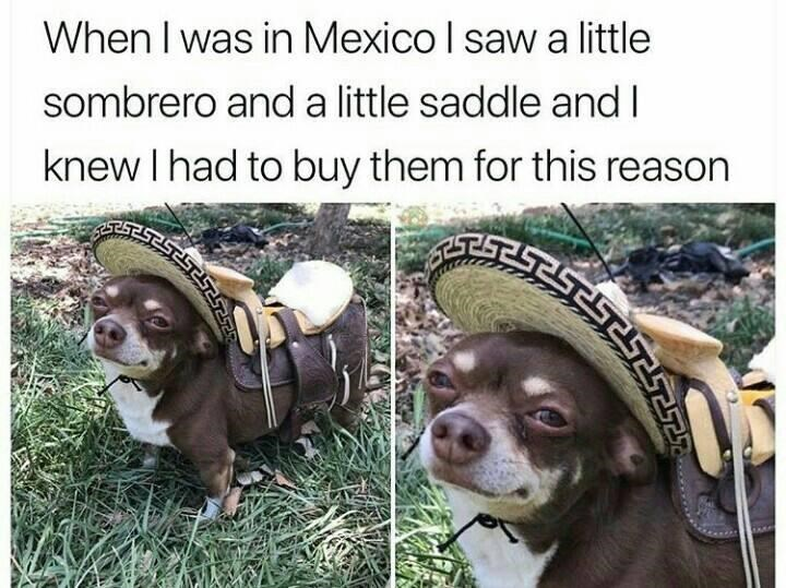 Dog - When I was in Mexico I saw a little sombrero and a little saddle and I knew I had to buy them for this reason