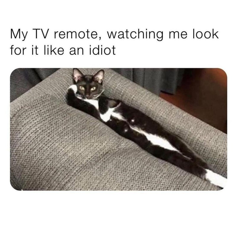 Cat - My TV remote, watching me look for it like an idiot