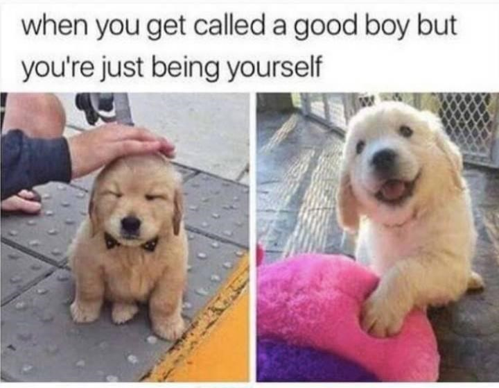 Dog - when you get called a good boy but you're just being yourself